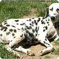 Adopt A Pet :: Luna - Milwaukee, WI