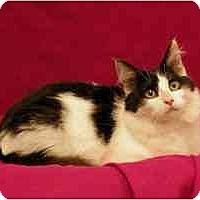 Adopt A Pet :: Aristotle - Sacramento, CA