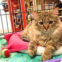 Adopt A Pet :: Nyota - Foothill Ranch, CA