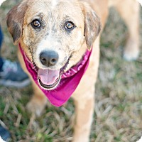 Adopt A Pet :: Gidget - Kingwood, TX
