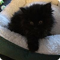 Adopt A Pet :: Tilly - Edmonton, AB