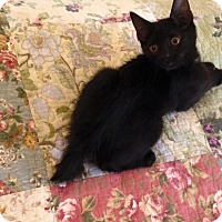 Adopt A Pet :: Harlow - Gainesville, FL