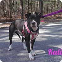 Adopt A Pet :: Kali - Muskegon, MI