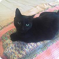 Adopt A Pet :: Mickey - Brooklyn, NY