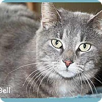 Adopt A Pet :: Blue Bell - South Bend, IN