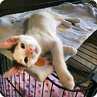 Adopt A Pet :: Milky - Mission Viejo, CA