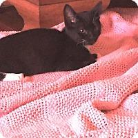 Adopt A Pet :: Pepper - Putnam, CT
