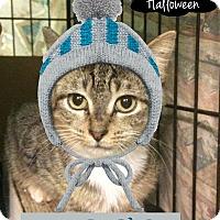 Adopt A Pet :: Midge - East Brunswick, NJ