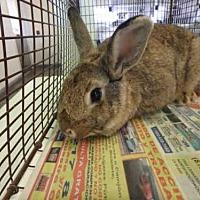 Adopt A Pet :: A1655399 - Los Angeles, CA