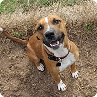 Adopt A Pet :: Mr. Gus - Fort Atkinson, WI