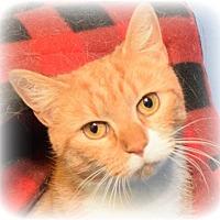 Adopt A Pet :: Diane (No adoption fee) - Media, PA
