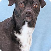 Adopt A Pet :: Bagby - Encinitas, CA