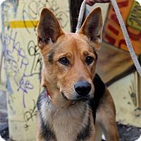 Adopt A Pet :: Bart - Los Angeles, CA