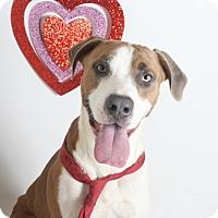 Adopt A Pet :: Stanley - Redding, CA