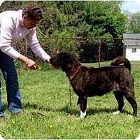 Adopt A Pet :: Mara - East Amherst, NY