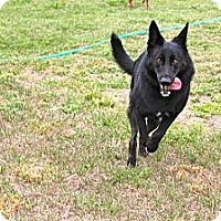 Adopt A Pet :: Chloe - Green Cove Springs, FL