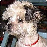 Adopt A Pet :: Sweetie - Mays Landing, NJ