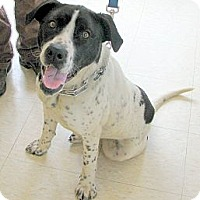Adopt A Pet :: Pepper - Ludington, MI