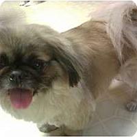 Adopt A Pet :: Teddy - Virginia Beach, VA