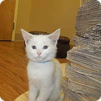 Adopt A Pet :: Merrill - Medina, OH