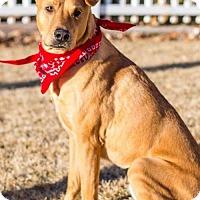Adopt A Pet :: Jake - Salt Lake City, UT
