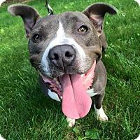 Adopt A Pet :: Stella - Southampton, PA