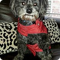 Adopt A Pet :: Labella - Homewood, AL