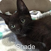 Adopt A Pet :: Shade - Norwich, NY
