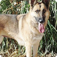 Adopt A Pet :: Anika - Yreka, CA
