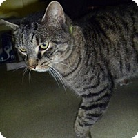 Adopt A Pet :: Ellsworth - Hamburg, NY