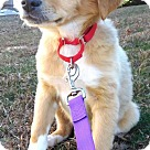 Adopt A Pet :: Pup Kent