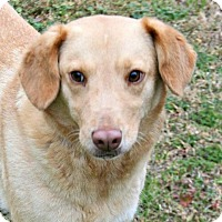 Adopt A Pet :: Meg - Lufkin, TX