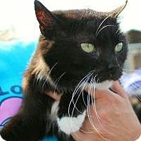 Adopt A Pet :: Ama - Hopkinsville, KY