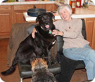 Labrador Retriever Mix Dog for adoption in Murphy, North Carolina - Shadow