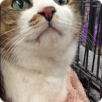 Adopt A Pet :: Shake - Redondo Beach, CA