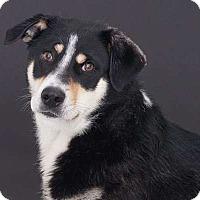 Adopt A Pet :: Sadie - Sudbury, MA