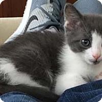 Adopt A Pet :: Revlon - Merrifield, VA