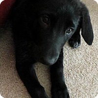 Adopt A Pet :: Scarlett - Grafton, WI