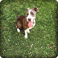 Adopt A Pet :: Kahleesi - tucson, AZ