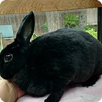 Adopt A Pet :: Tiana - Watauga, TX
