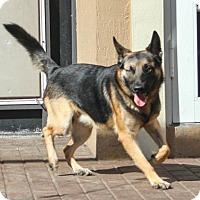Adopt A Pet :: Alaki aka Tito - Jupiter, FL