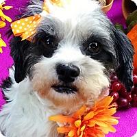 Adopt A Pet :: Figgy - Irvine, CA