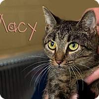 Adopt A Pet :: Macy - Somerset, PA
