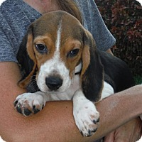 Adopt A Pet :: Muffin - Flanders, NJ