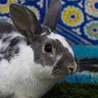 Adopt A Pet :: Santana - San Diego, CA
