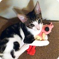 Adopt A Pet :: Karina - Houston, TX