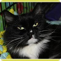 Adopt A Pet :: Jackie - New Richmond,, WI