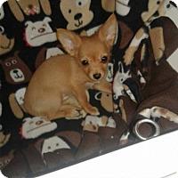 Adopt A Pet :: Nemo - Goodyear, AZ