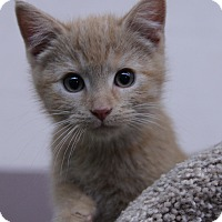 Adopt A Pet :: Liz - O Fallon, IL