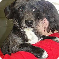 Adopt A Pet :: Baxter - Hartsville, TN